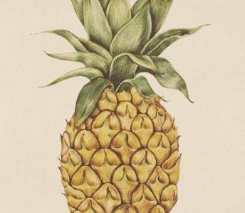 L'ananas comme brûleur de graisse : tout sur cet allié minceur naturel !